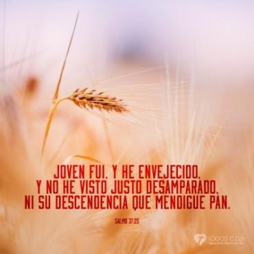 Dios provee de pan al justo.jpg