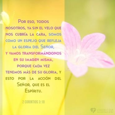El Señor nos va transformando a su imagen por medio de su Espíritu.jpg