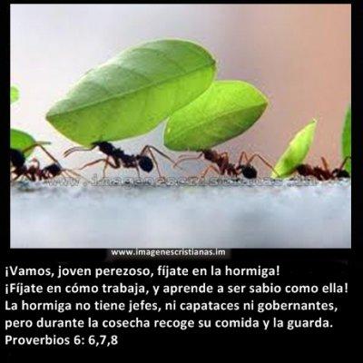 hormigas trabajadoras.jpg