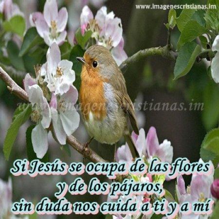 imagenes cristianas dios cuida de ti.jpg