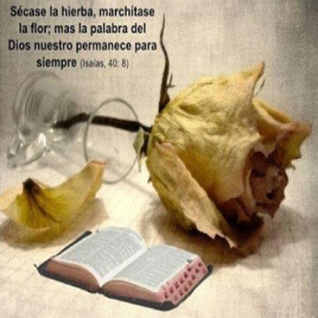 imagenes cristianas la palabra de dios siempre.jpg