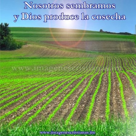imagenes cristianas la siembra y la cosecha.jpg