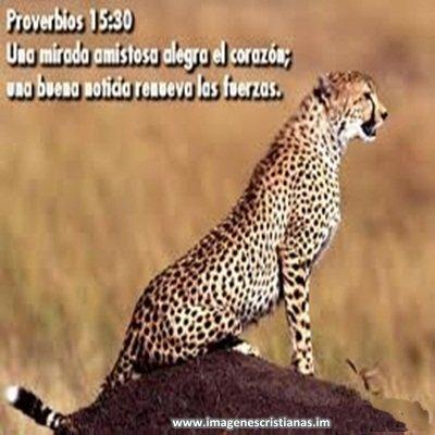 proverbios cristianos.jpg