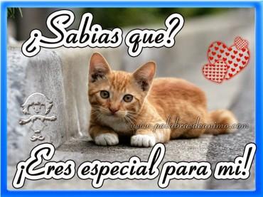 ¿Sabias que? ¡Eres especial para mi! – Facebook