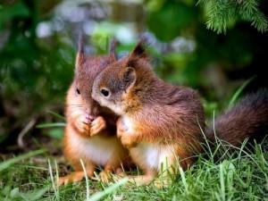 imagenes de animales enamorados-7
