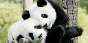 imagenes de animales enamorados